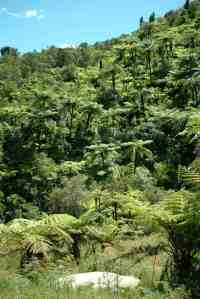 Lot 8 - view of native bush from house site